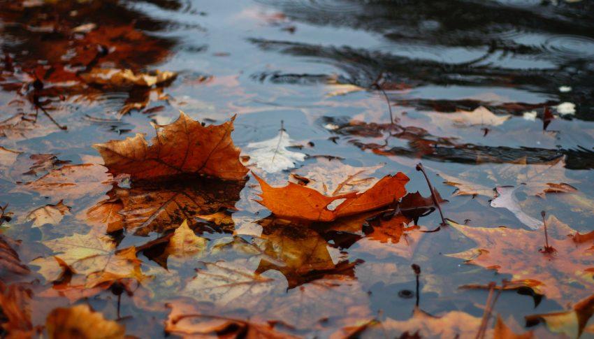 Aku, Kamu dan Hujan yang Jatuh Bersama